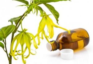 huile-d-ylang-ylang-560x390